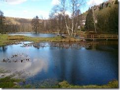 Hübscher Teich